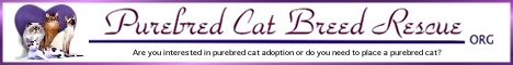 Support Purebred Cat Breed Rescue
